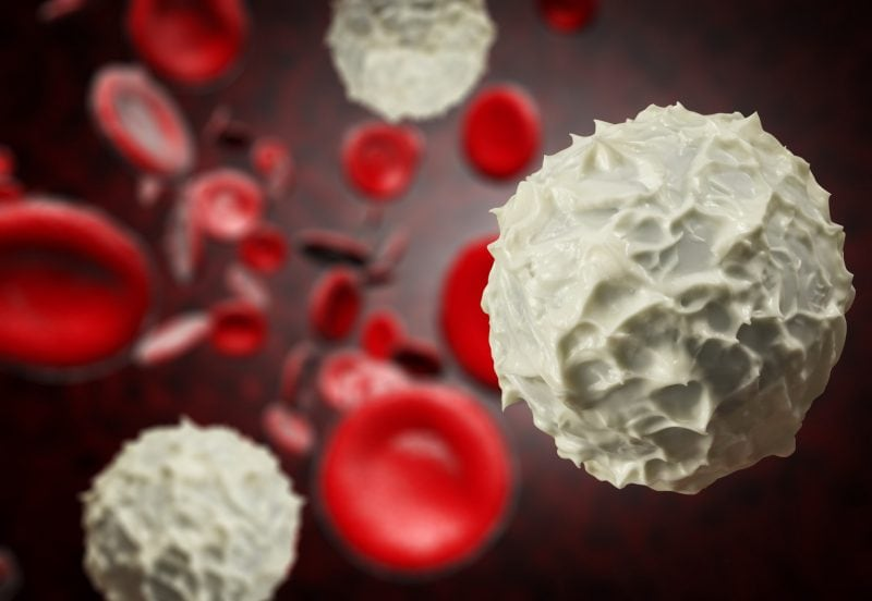 Healthy Red and White Blood Cells to boost your immune system